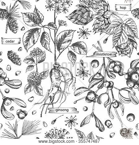 Seamless Pattern With Vintage Hand Drawn Sketch Medicine Herbs Elements Isolated On White Background