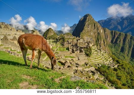 View Of The Lost Incan City Of Machu Picchu With Guanaco On The Foreground Near Cusco, Peru. Machu P