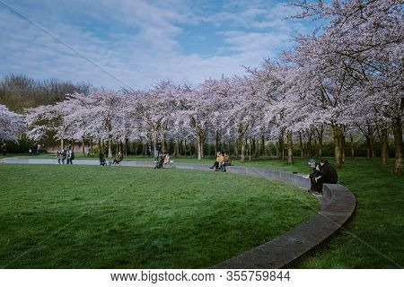 Amsterdam Netherlands March 2020, Kersenbloesempark Translation Flower Park There Are 400 Cherry Tre