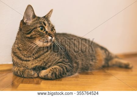 Image Of Beautiful Cat Resting On The Floor At Home.