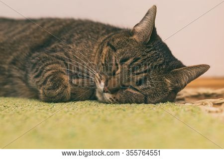 Image Of Beautiful Cat Sleeping On The Floor At Home.