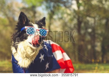 Border collie dog outside wearing an american flag cape and patriotic sunglasses