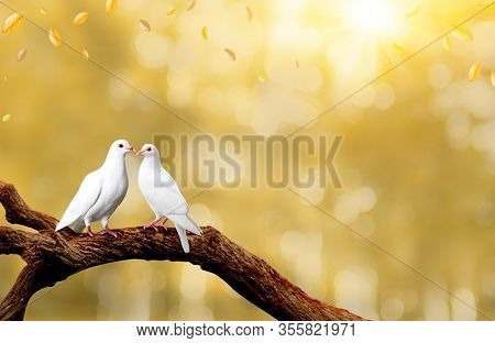 Two White Seagulls With Love. Valentine And Sweetest Day Concept. Freedom Of Couples Doves Bird On T