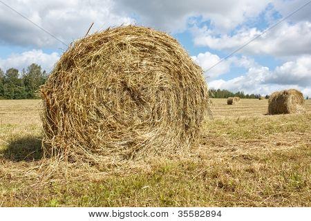 Hayfield and haystack