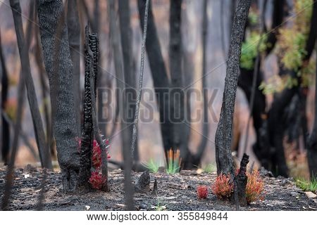 Life Returns As Trees And Plants Start To Recover After Bush Fires Burnt The Bush In The Hot Dry Sum