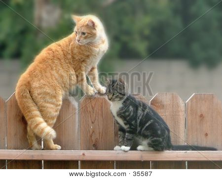 poster of cats on fence