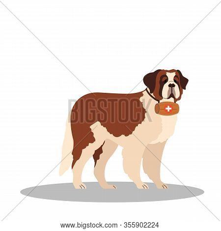 Dogs Rescuer, St Bernard Breed. Cadaver Dog For Finding People.