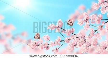 Horizontal banner with sakura flowers of pink color and two butterflies on sunny backdrop. Beautiful nature spring background with a branch of blooming sakura. Copy space for text