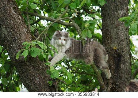 Beautiful Cat Sitting On A Tree. Cat Sitting On A Tree