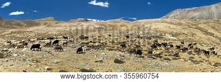 Goats And Sheeps Herd, Pamir Mountains, Landscape Around Pamir Highway, Tajikistan