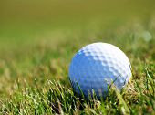Closely focused image of golfball in grass poster