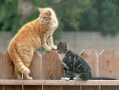 cats on fence poster