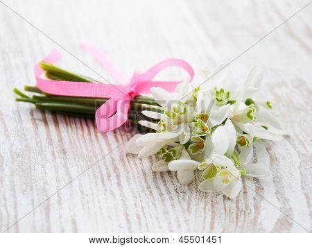 Bunch Of Snowdrop Flowers