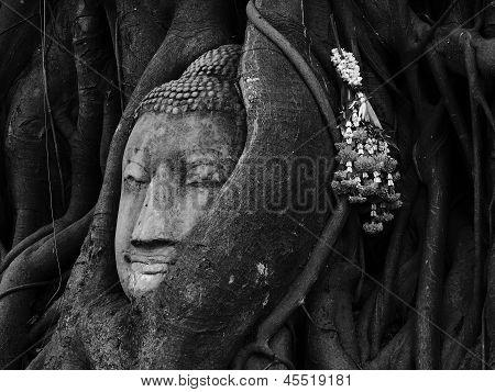 Head of Sandstone Buddha overgrown by Banyan Tree, Ayutthaya historical park, Thailand