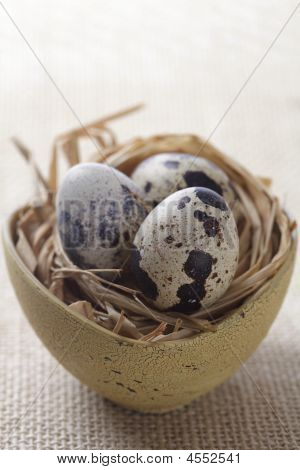 quail speckled eggs in a nest and bowl shallow DOF poster