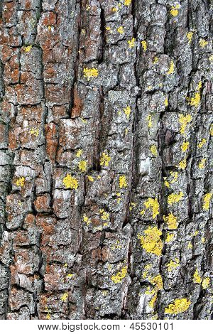Vertical tree bark background