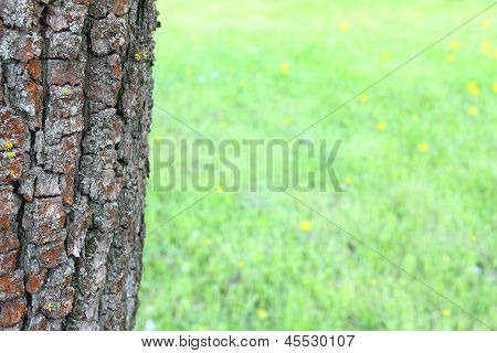 Old tree and green grass
