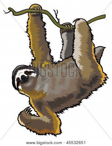Brown Three Toed Sloth