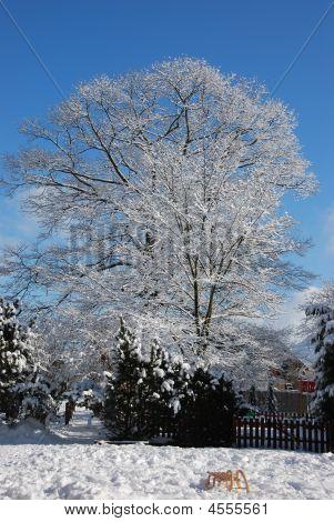 Winter Scene At Village