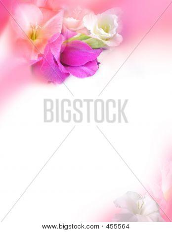 Love Greeting Card - Pink Gladiolus