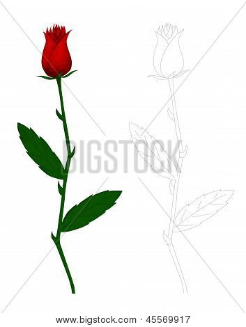 Illustration Of A Rose Flower