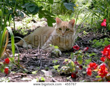 Cat Resting In The Summer Flower Garden
