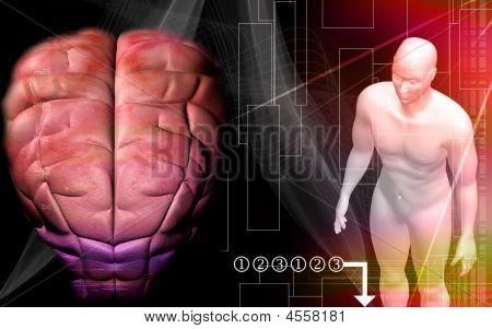 Human Brain With Human Body