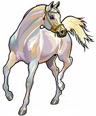 arabian horse with bridle,front view picture isolated on white background poster