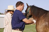 Local Veterinarian administers anesthetic to Tennessee Walking Horse prior to floating its teeth. poster