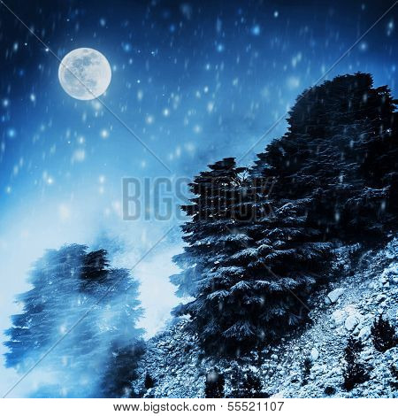 Beautiful winter landscape, big pine trees on high snowy mountain in dark night, magical moon light, Christmas time concept