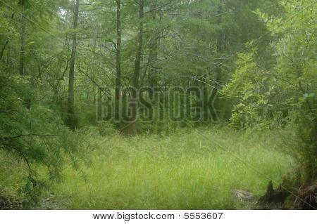 Fairy Woods 2
