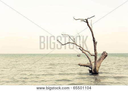 Tropical Beach View In Vintage Style. Ocean Landscape With Lonely Dead Tree In Water At Pranang Cave