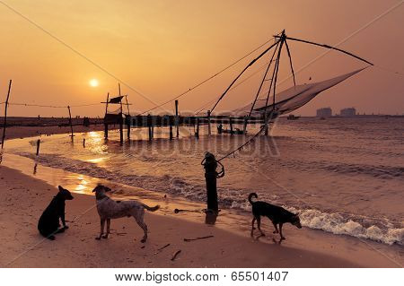 Tropical Beach Sunset With Dogs At Ocean Coast
