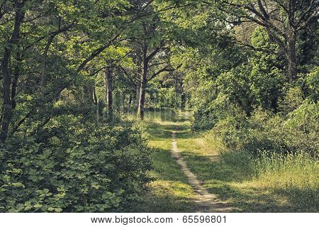 Walking In Pinewood Forest