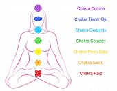 Seven main chakras  - Spanish labeling! Crown Chakra (purple), Third Eye Chakra (blue), Throat Chakra (light blue), Heart Chakra (green), Solar Plexus Chakra (yellow), Sacral Chakra (orange) and Root Chakra (red) - beaded along the corresponding body poster