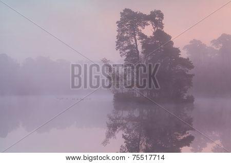 Misty Sunrise On Forest Lake With Birds
