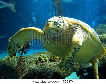 Sea Turtle Encounter