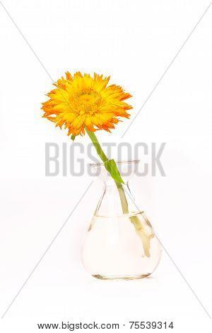 My Yellow Flower