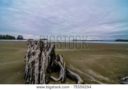 Chesterman Beach driftwood