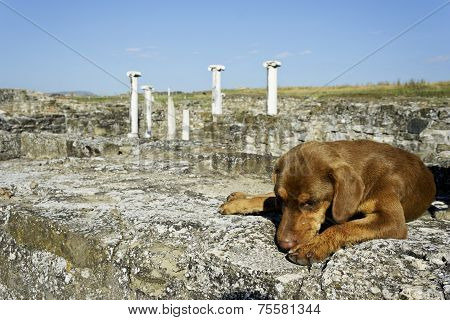 Dog Sleeping On Stones In Archaeological Site Stobi, R.macedonia