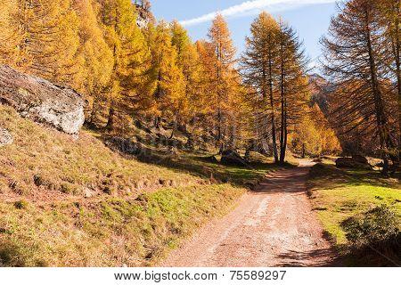Mountain Forest In Autumn Season