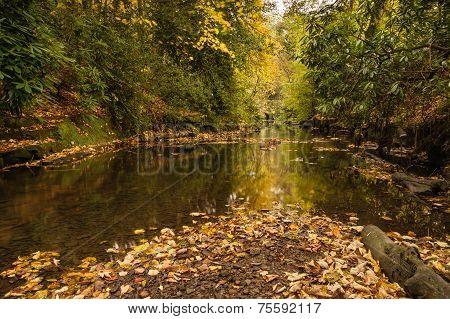 Autumn In Jesmond Dene