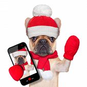 fawn bulldog dog as santa claus on christmas taking a selfie and waving with hand isolated on white background poster