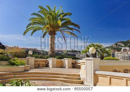 Palm at Monaco