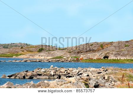 Swedish Coast With Blue Ocean And Sea