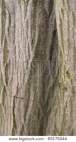 lines on a tree
