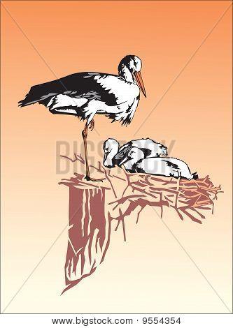 Stork and nest