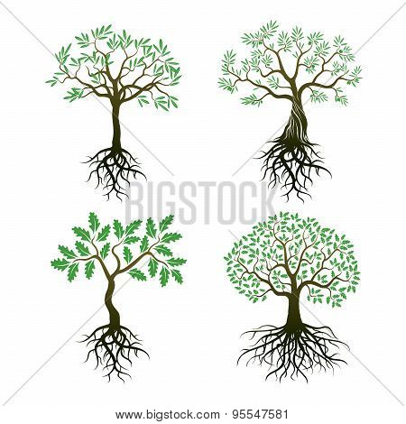 Set Of Trees And Roots. Oak And Olive Trees.