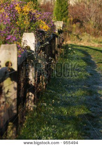 Frosty Path Along Fence