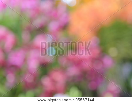 Defocused Colorful Flowers For Abstract Background